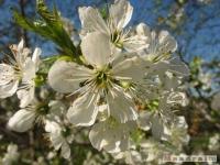 kwiat_213