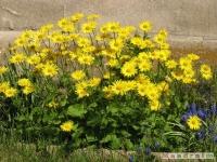 kwiat_215