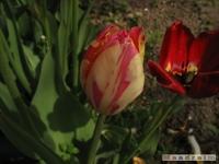 kwiat_219