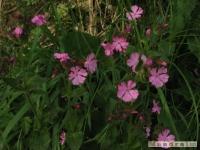 kwiat_221