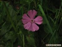 kwiat_222
