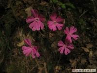 kwiat_223