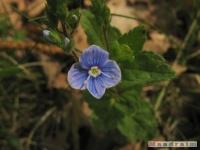 kwiat_225