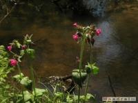 kwiat_226