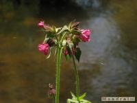 kwiat_227