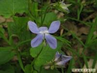 kwiat_228