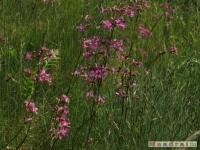 kwiat_229