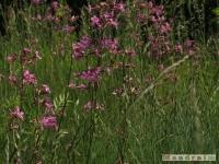 kwiat_230