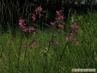 kwiat_231