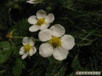 kwiat_233