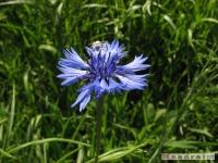 kwiat_235