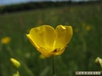 kwiat_237