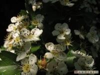kwiat_238