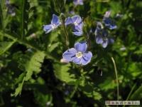 kwiat_240