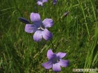 kwiat_241