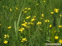 kwiat_242