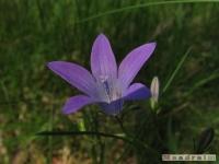 kwiat_243
