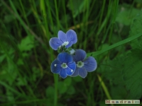 kwiat_246