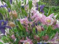 kwiat_247
