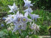 kwiat_248