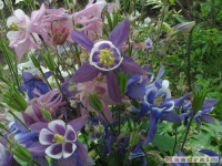 kwiat_249