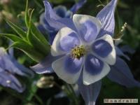 kwiat_250