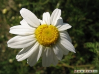 kwiat_252
