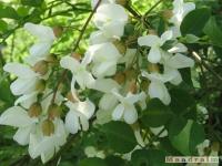 kwiat_253