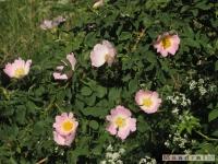 kwiat_254