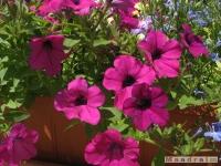 kwiat_255
