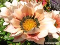 kwiat_257