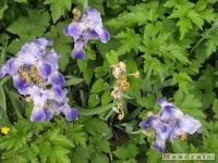 kwiat_264