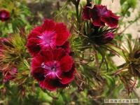 kwiat_265