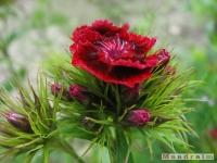 kwiat_266