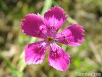 kwiat_276