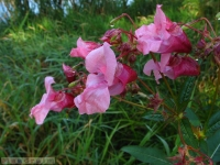 kwiat_280