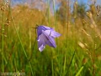 kwiat_285