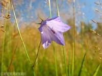 kwiat_286