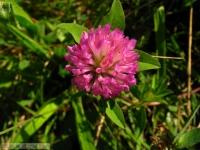 kwiat_290