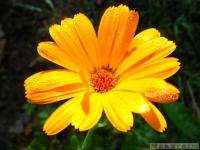 kwiat_296