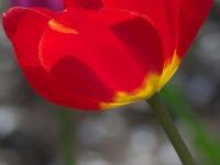kwiat_304
