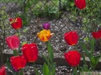 kwiat_305