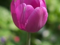 kwiat_308