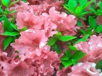 kwiat_313