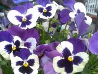 kwiat_315