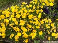 kwiat_316