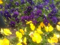 kwiat_318
