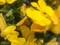 kwiat_320