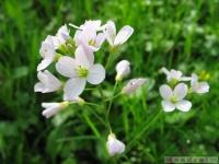 kwiat_321