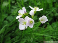 kwiat_323